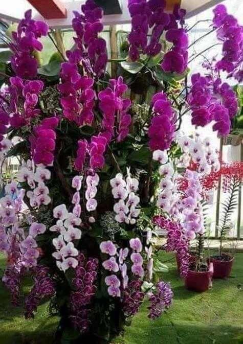 19 exotische Arten von tropischen Blumen für Hauptdekorationen .