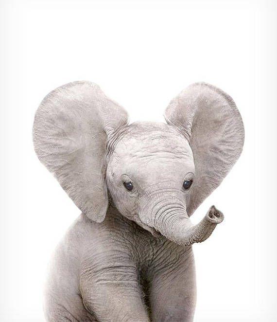 Safari Kinderzimmer Kunst, Elefant print, druckbare Kunst, Safari .