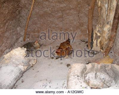 Hühner Schlafplatz in einer Küchenhütte mit einem primitiven Herd .